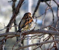 Bird by mesutduvarci  http://ift.tt/2kRzJWX