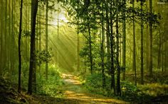 Sunny Forest Backgrounds - ImgCell