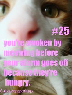 Cat Owner Problems #25...and god help you if you don't get up fast enough