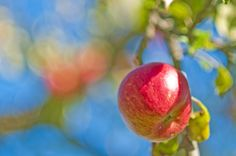"""Verbraucherzentralen kritisieren Kennzeichnung """"regional"""" auf Lebensmitteln..."""