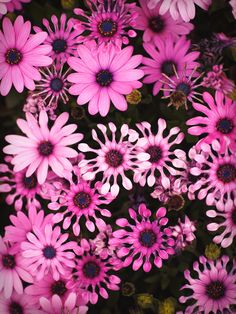 """Japanese colors 躑躅色 tsutsuji-iro: Japanese has many words for colors. This pink is 躑躅色 """"tsutsuji-iro"""" and means vibrant purple pink."""