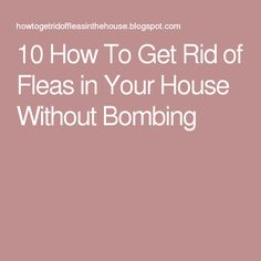 10 how to get rid of fleas in your house without bombing useful 10 how to get rid of fleas in your house without bombing useful tips pinterest natural flea killer dog things and dog ccuart Images