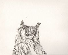 Sophie-Rose Martin, owl drawn with fine liners on textured watercolour paper. Originally pinned by Sophie-Rose Martin. Watercolor Paper, Owl, Illustrations, Drawings, Animals, Sketches, Animais, Animales, Animaux