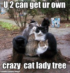 Cats and kittens are so funny and cute animals, they are simply the best! Just look how all these cats & kittens play, fail, get along with dogs, get their Funny Cat Memes, Funny Cats, Funny Animals, Cute Animals, Cat Puns, Crazy Cat Lady, Crazy Cats, Photo Chat, Funny Cat Pictures