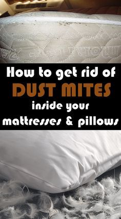 Learn how to get rid of dust mites inside your mattresses and pillows.