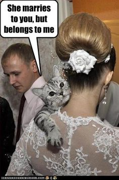 memes laughing so hard kittens Cats are cute and sometimes unintentionally do stupid funny things, so we have collected some the funniest and most hilarious cat memes and pictures hope you will enjoy em. I Love Cats, Cute Cats, Funny Cats, Funny Animals, Cute Animals, Animal Funnies, Adorable Kittens, Crazy Cat Lady, Crazy Cats
