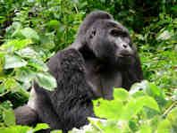 Green World Safaris in Uganda and other nearby countries.