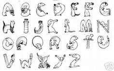 Ferret Alphabet
