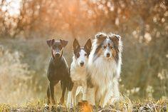 Ear set examples!  best friends / / Daria Kusch