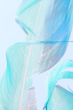 Colors / Blue / Plume / Douceur / Calme / Feather / Calm / Pastel