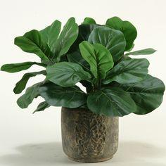 Fiddle Leaf Fig Desk Top Plant in Planter