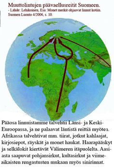 Migratory birds migration routes to Finland.