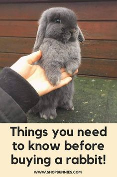 Things You Need To Know Before Buying A Rabbit