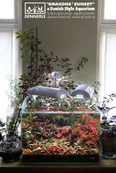 """Dragons' Sunset"", Dennerle Scaper's Tank and Danish Style Aquarium - by Marie-Sophie Germain, www.danish-style-aquarium.com"