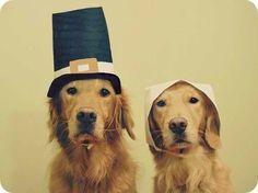 thanksgiving Shmachilles