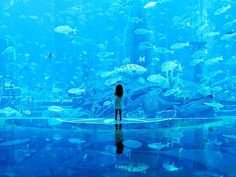 Travel Photography: Dubai Aquarium & Underwater Zoo  With the capacity to hold 10 million litres of water, Dubai Aquarium illuminates the marvels of the ocean floor and showcase one of the most diverse collections of marine life worldwide.  Photo credit: Jim Grover