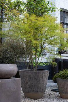 Outdoor Planters, Garden Planters, Outdoor Gardens, Modern Landscaping, Backyard Landscaping, Container Plants, Container Gardening, Mediterranean Garden Design, Potted Trees
