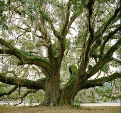 Trees. Oh how I love trees.
