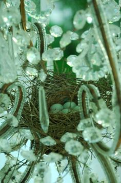 Birds built a nest in a chandelier on the porch.  Their eggs hatched on mother's day.  ❤❤