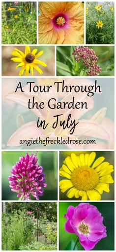 A Tour Through The Garden In July -- Welcome to another week of Tuesdays In The Garden! Summer is flying by, and I've really been enjoying July. Daylilies are in full bloom and dahlias are getting taller each day. I'm still having great success with the clematis I planted in a big container this spring. I'm...