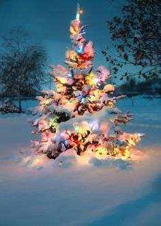 christmas lights in the snow. I love winter+Christmas time! Christmas Time Is Here, Noel Christmas, Merry Little Christmas, Outdoor Christmas, Winter Christmas, Vintage Christmas, Magical Christmas, Christmas Ideas, Christmas Scenes