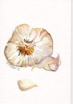 Garlic is good for dinner and watercolors