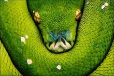 Amazing examples of snake photography