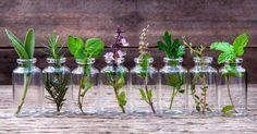 Tener un jardín de hierbas aromáticas en casa es una gran idea. Te permite tener siempre a mano tus preferidas para añadirlas a tus platos favoritos. Y no necesitas grandes conocimientos ni siquier…