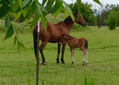 Mom and her new foal taken 5/4/16