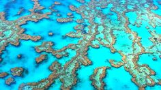 Great Barrier Reef-scuba diving here is amazing!  Easter 2004