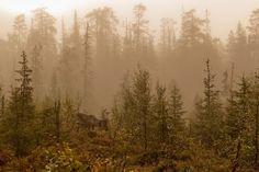 Morning fog by Petri Forss