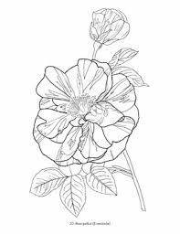 This Image Is From The Kew Gardens Colouring Book A Great As