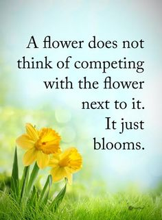 A flower does not think of competing with the flower next to it. It just blooms.  #powerofpositivity #positivewords  #positivethinking #inspirationalquote #motivationalquotes #quotes #life #love #grow #compete #blooms