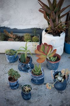 Jeans Cover succulents ....in denim covered pots , how clever...
