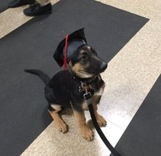 This puppy just graduated from puppy training #cute