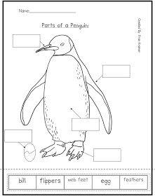 Penguin Life Cycle Worksheet penguins on pinterest penguins, emperor ...