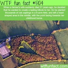 Farmer creates a tribute to his late wife - WTF fun facts