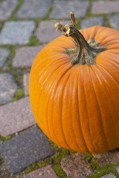 How to Grow a Small Sugar Pumpkin in a Container