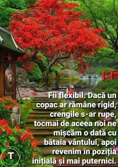 Rupaul, Plants, Plant, Planets