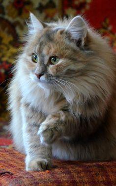 Les chats de Mostly. Quelle belle bête : douceur et force enveloppée de dignité.
