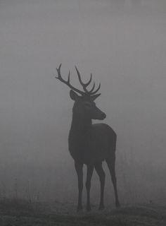 Photo cerf - noir et blanc