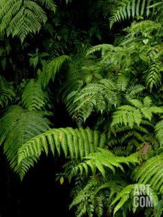 Close View of Lush Foliage in a Rain Forest Photographic Print by Todd Gipstein at Art.com