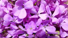 Con estas florecillas te puedes hacer tu camiseta con tejido Coolmax... Ponte Color!!!! Ponte Forest Soul!