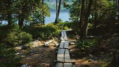 Nature Path Walkway Boardwalk Autumn Fall Tunnel Beautiful Nature photography Maine Acadia national park Jordan pond