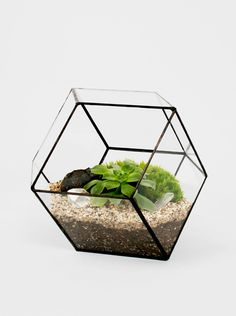 Dimensions - x The Rhombus is handmade to order with glass and lead free solder. Each piece comes with its own kit of rocks, sand, activa. Glass Terrarium, Succulent Terrarium, Devine Design, Office Plants, Unique Plants, Interior Plants, Interior Design, Decorating Coffee Tables, Glass Garden