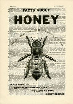 Honey Bee Dictionary art vintage flying insects on Upcycled Vintage Dictionary Paper - 7.75x11 under 20