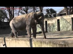 Depressed Elephant Has Been Living In A Concrete Cell For 61 Years
