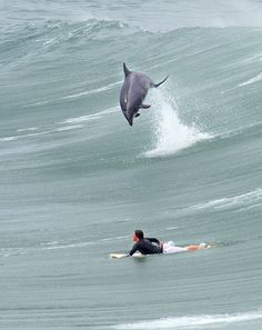 dolphin! But if I was that surfer if be fur sure thinking that was a shark paddling my ass back to shore lmao