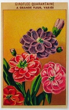 French Flower Seed Label, Giroflee Quarantaine