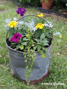 Old metal bucket as flower pot for the garden